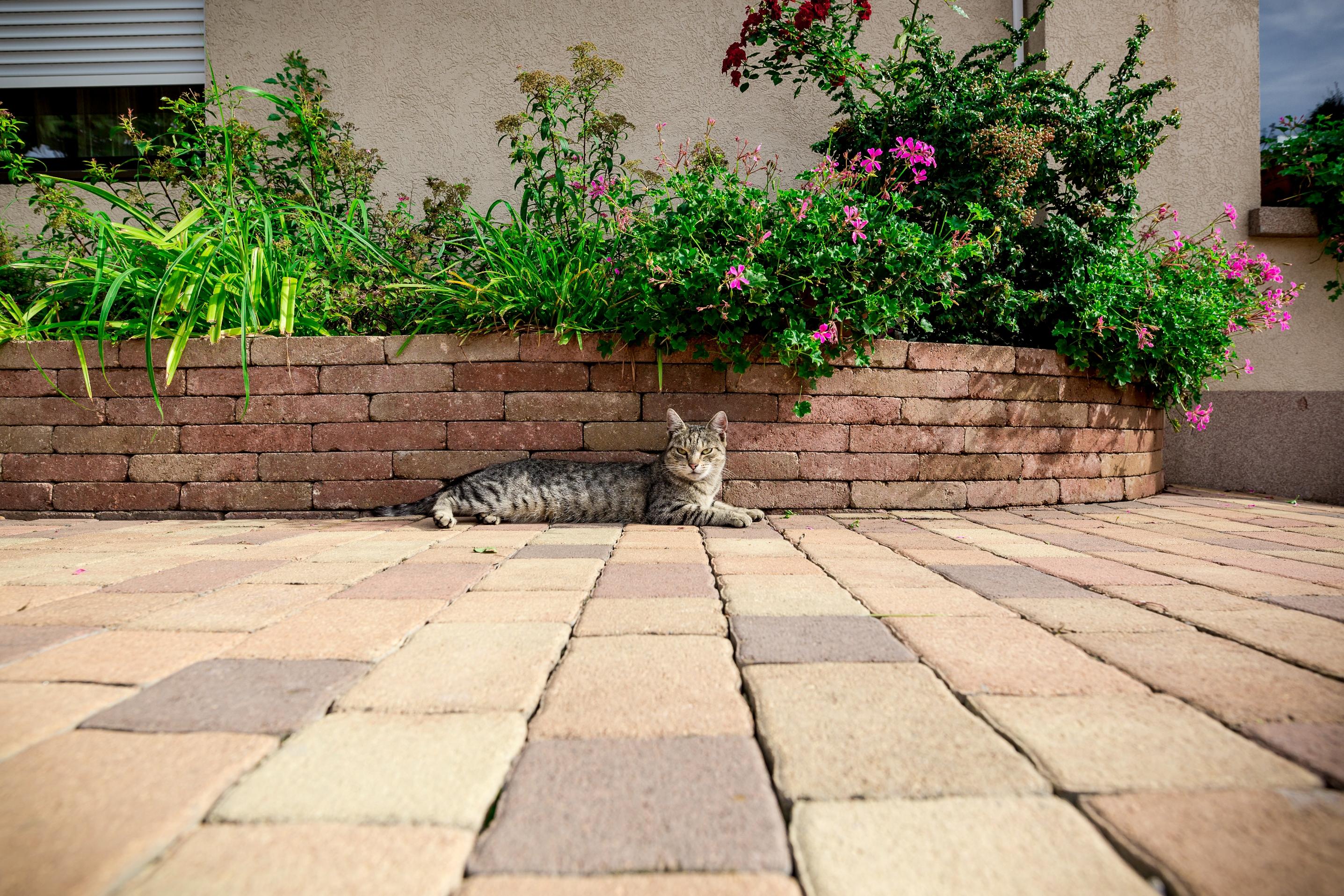 Cirkó cica